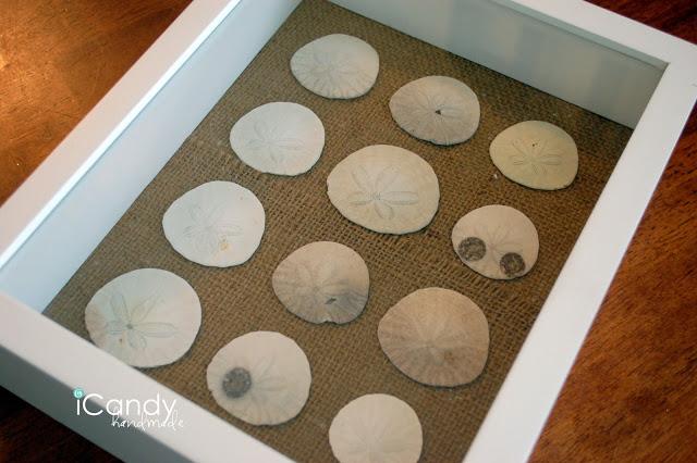 Sand Dollar Specimen Art